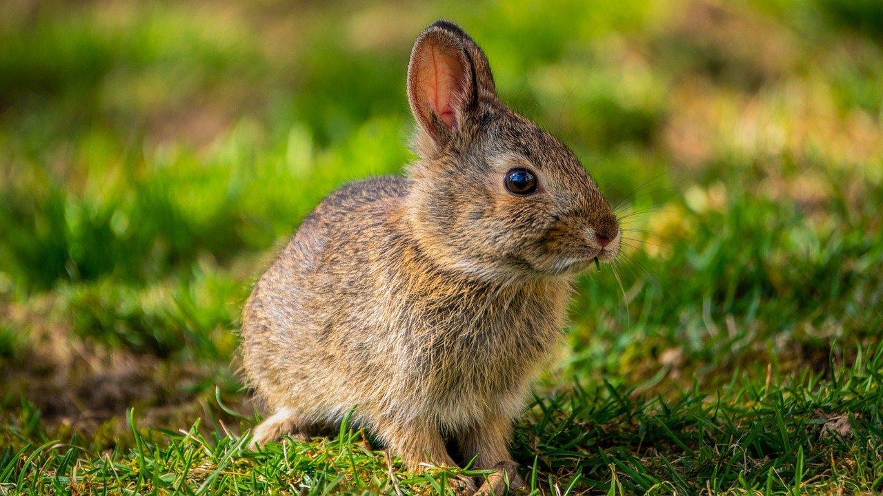 ФИОП поддержал разработку образовательных программ по нанотехнологическим методам защиты сельхозрастений и геномике в кролиководстве
