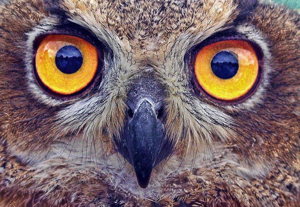 Минсельхоз предложил новые меры поддержки птицеводческих предприятий