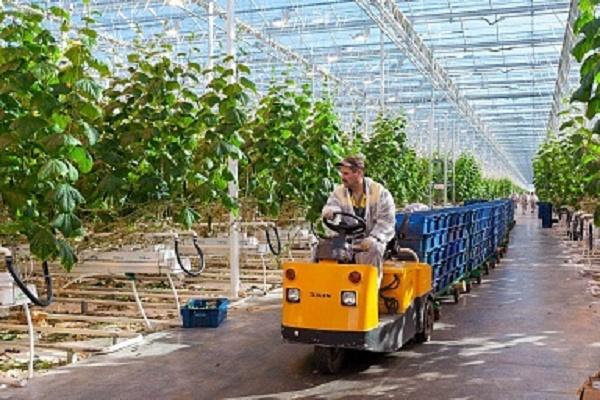 За пять лет производство овощей в российских теплицах выросло на 80%