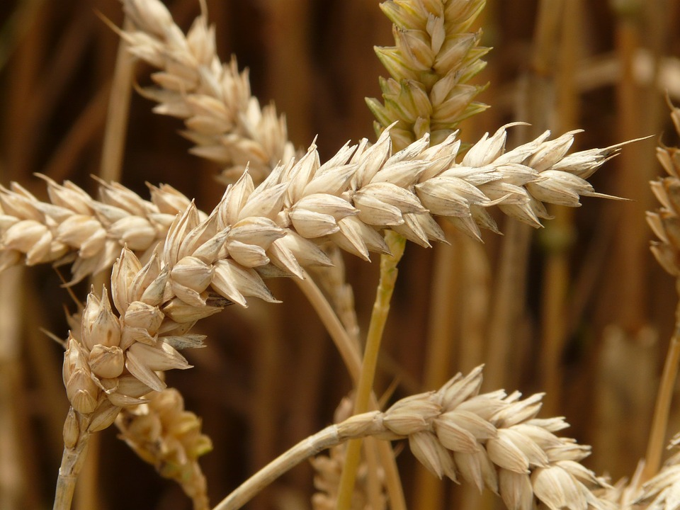 Минсельхоз начал тестирование механизма расчета «плавающей» пошлины на экспорт зерновых