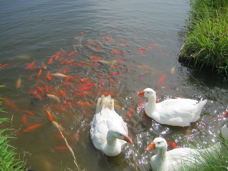 Правительство выделит дополнительные средства на поддержку птицеводческих предприятий и рыбохозяйственного комплекса
