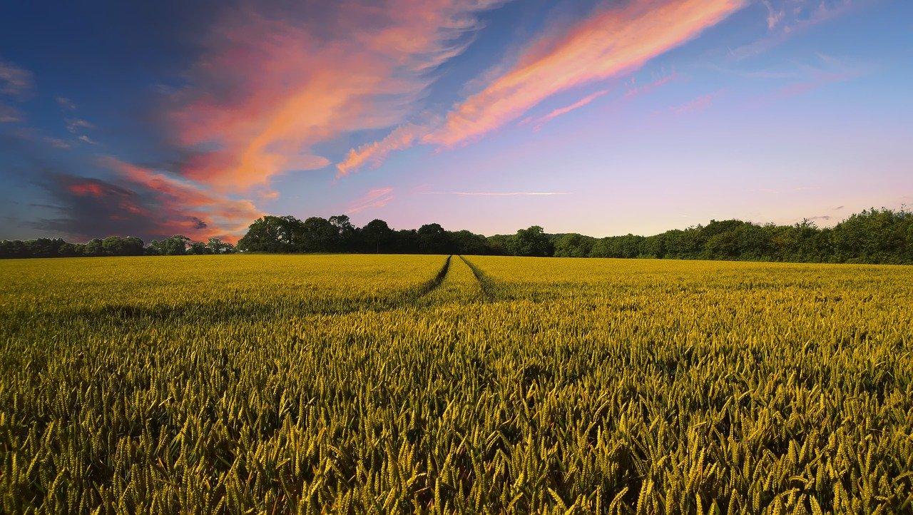 Правительство утвердило госпрограмму эффективного вовлечения в оборот земель сельскохозяйственного назначения и развития мелиоративного комплекса