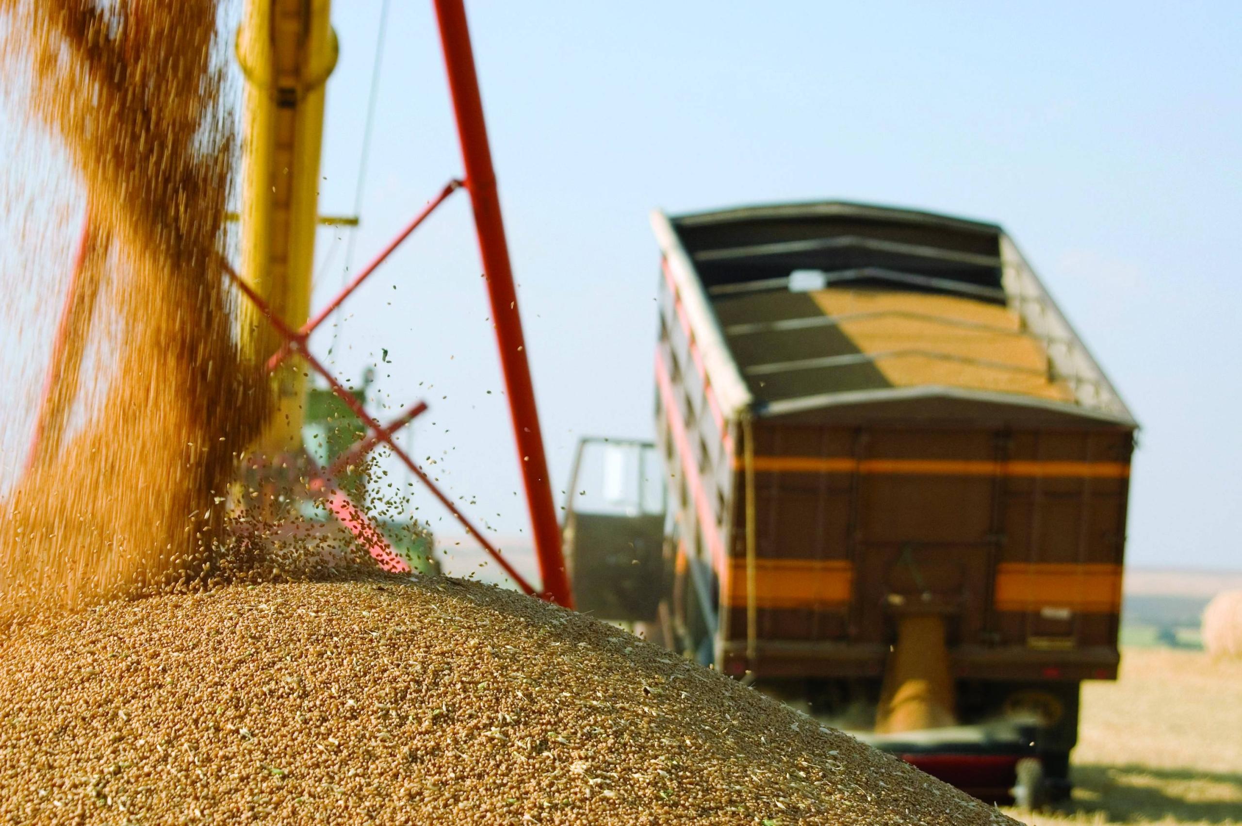 Экспорт зерна в сезоне 2020/2021 гг. превысит 48 млн тонн