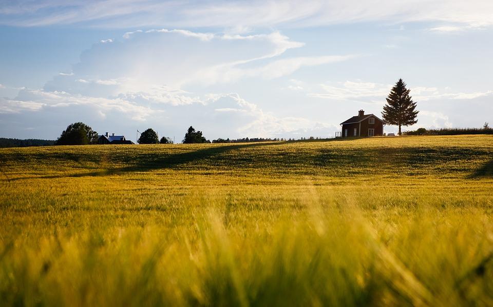 Правительство выделило 6 млрд рублей на развитие сельских территорий