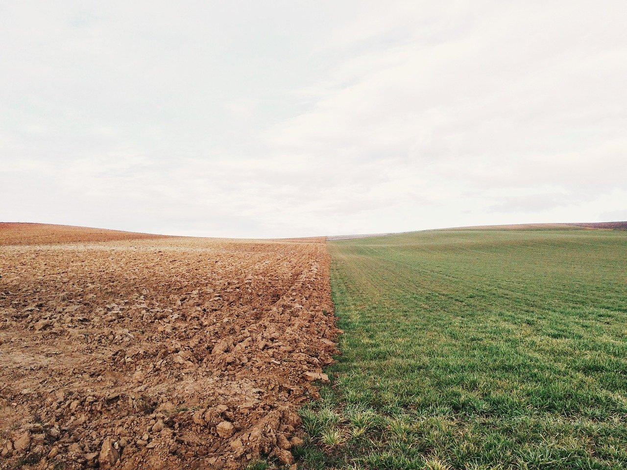 Как и для чего проводится межевание земельного участка?