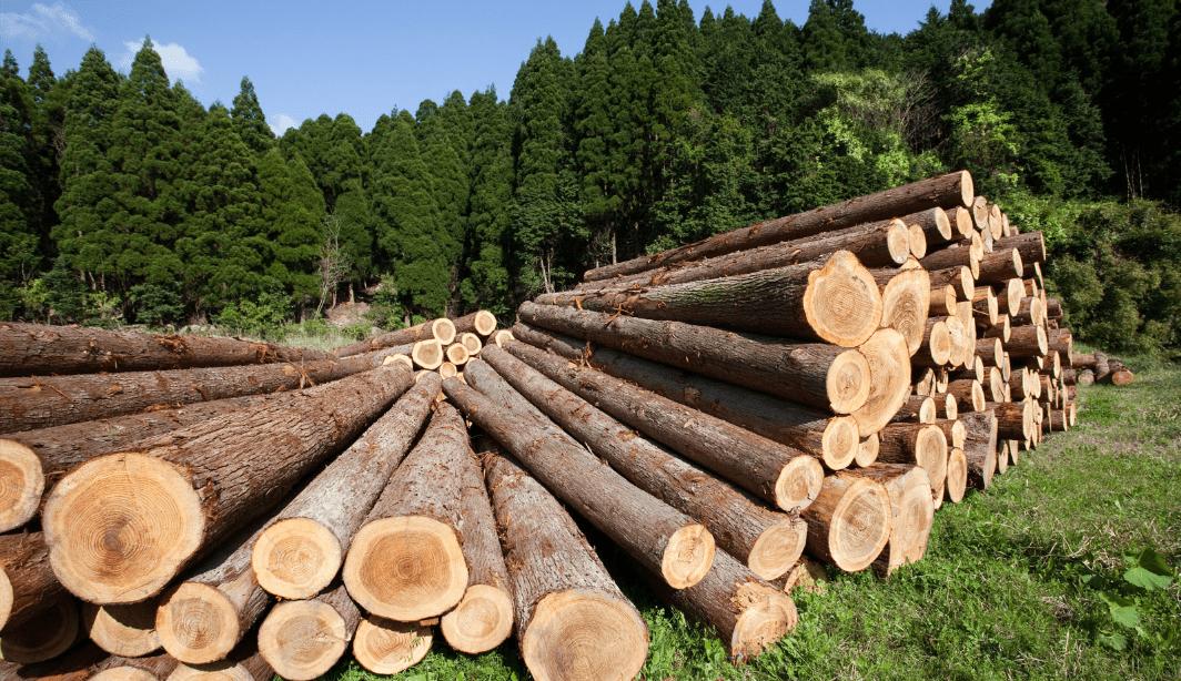 С 2022 года запрещается экспорт необработанной древесины