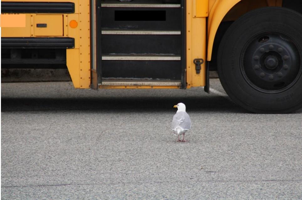 В регионы России поступит более 4 тыс. школьных автобусов и свыше 1,6 тыс. машин скорой помощи