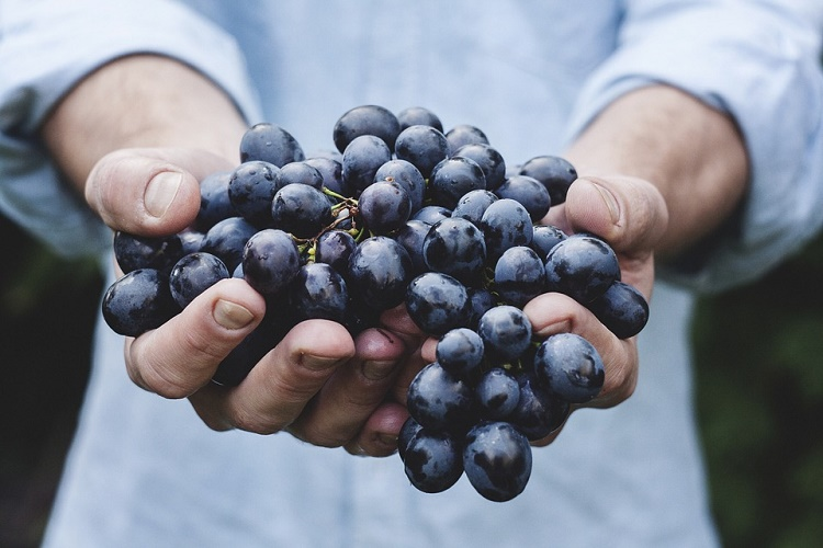 Господдержка виноградарства в России до 2030 превысит 25 млрд рублей